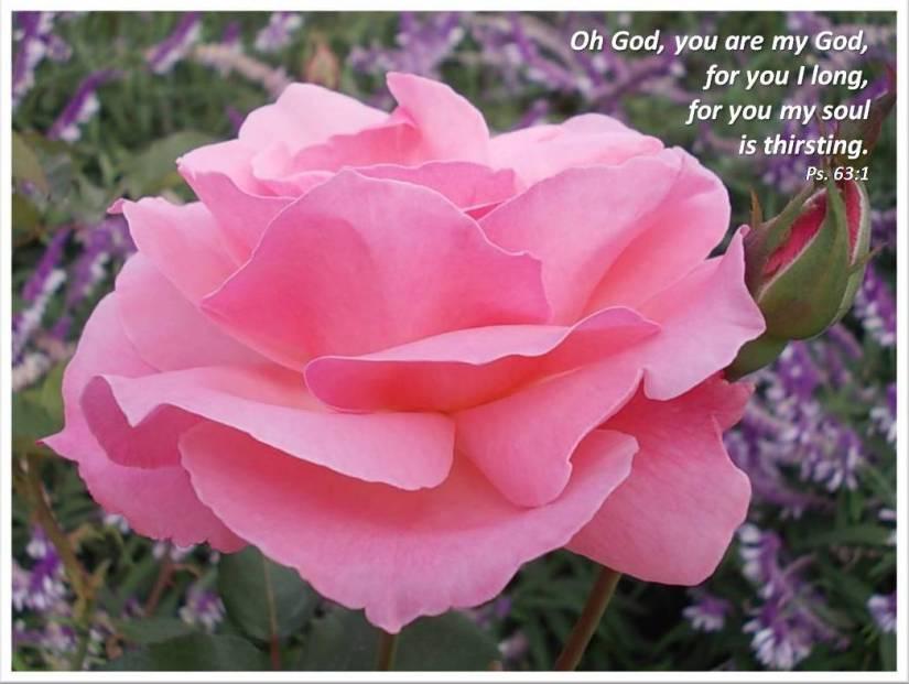O God you are my God